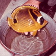 熱帯魚-名前は不詳